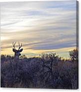 Deer Ridge - Sunset Buck Canvas Print