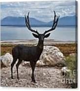 Deer Statute On Antelope Island  Canvas Print
