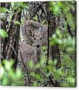 Deer Through The Trees Canvas Print