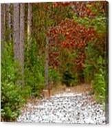 Deer Trail Canvas Print