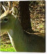 Deer4 2009 Canvas Print