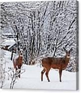 Deers In Winter Canvas Print