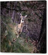 Deer's Stomping Grounds. Canvas Print