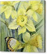 Delias Mysis Union Jack Butterfly On Daffodils Canvas Print