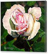 Delicate Creation Canvas Print