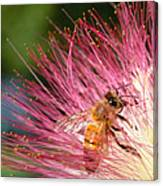 Delicate Embrace - Bee And Mimosa Canvas Print