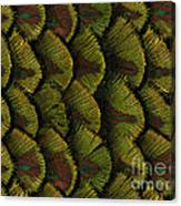 Delicate Feather Canvas Print