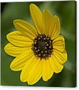 Delicate Flower Canvas Print