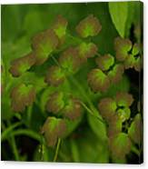 Delicate Green Canvas Print