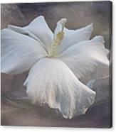 Delicate Hibiscus Canvas Print
