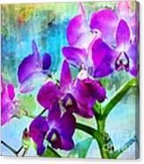 Delicate Orchids Canvas Print