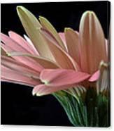Delicate Petals. Canvas Print