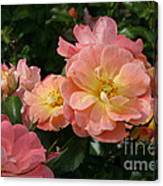 Delicate Pink Roses Canvas Print