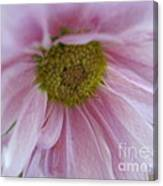Delicate Pink Canvas Print