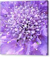 Delicate Purple Canvas Print