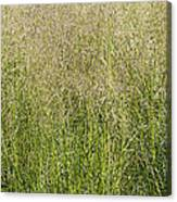 Delicate Tall Grasses Canvas Print