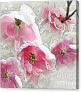 Delicate Tree Peonies Branching Out Canvas Print