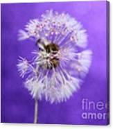 Delicate Wish Canvas Print