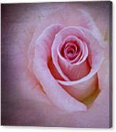 Delicately Pink Canvas Print