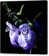 Delicately Purple Canvas Print