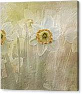 Delightful Daffodils Canvas Print