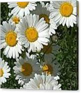 Delightful Daisies Canvas Print