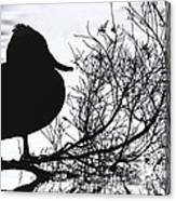 Delightful Duck Canvas Print