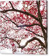 Delightful Fall Canvas Print
