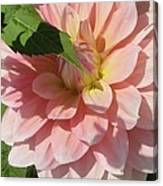 Delightful Smile Dahlia Flower Canvas Print