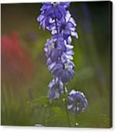 Delphinium Blossom Canvas Print
