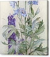 Delphiniums Canvas Print
