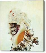 Delphinula Sea Shell Canvas Print