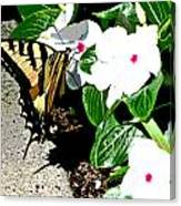 Delta Butterfly Cafe Canvas Print