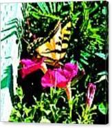 Delta Butterfly Dazes Canvas Print