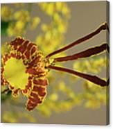 Dendrobium Canvas Print