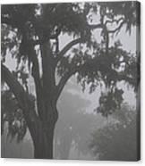 Dense Morning Fog In Oaks Canvas Print