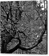 Denver Tree Fx Canvas Print