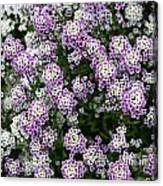 Descanso Gardens 11 Canvas Print