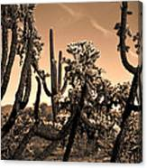 Desert At Dusk Canvas Print
