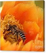 Desert Bee Canvas Print