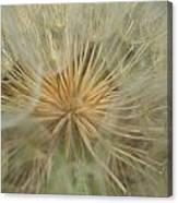 Desert Dandelion 4 Canvas Print