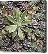 Desert Flora Canvas Print