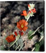 Desert Flowers Canvas Print