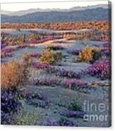 Desert In Bloom Canvas Print