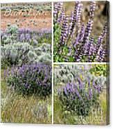 Desert Lupine Collage Canvas Print