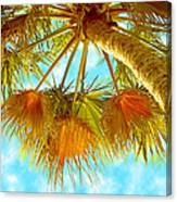 Desert Palm Canvas Print