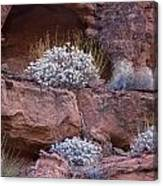 Desert Plant Life Canvas Print