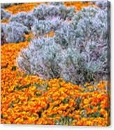Desert Poppies And Sage Canvas Print
