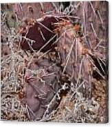Desert Prickly Pear Cactus Canvas Print