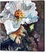 Desert Prickly Poppy Canvas Print